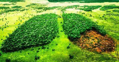 Las leyes de medio ambiente no están favoreciendo las problemáticas actuales