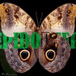 Lepidóptera | mariposas coloridas en Tecoluca