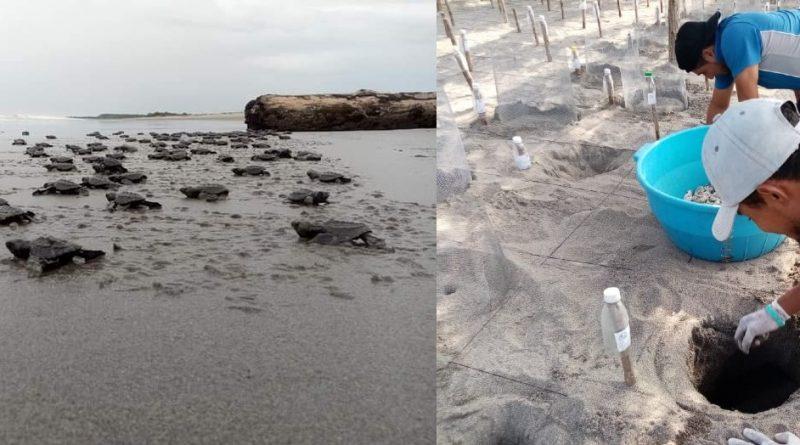 Mágica naturaleza en el Corral de Tortugas en Isla Montecristo